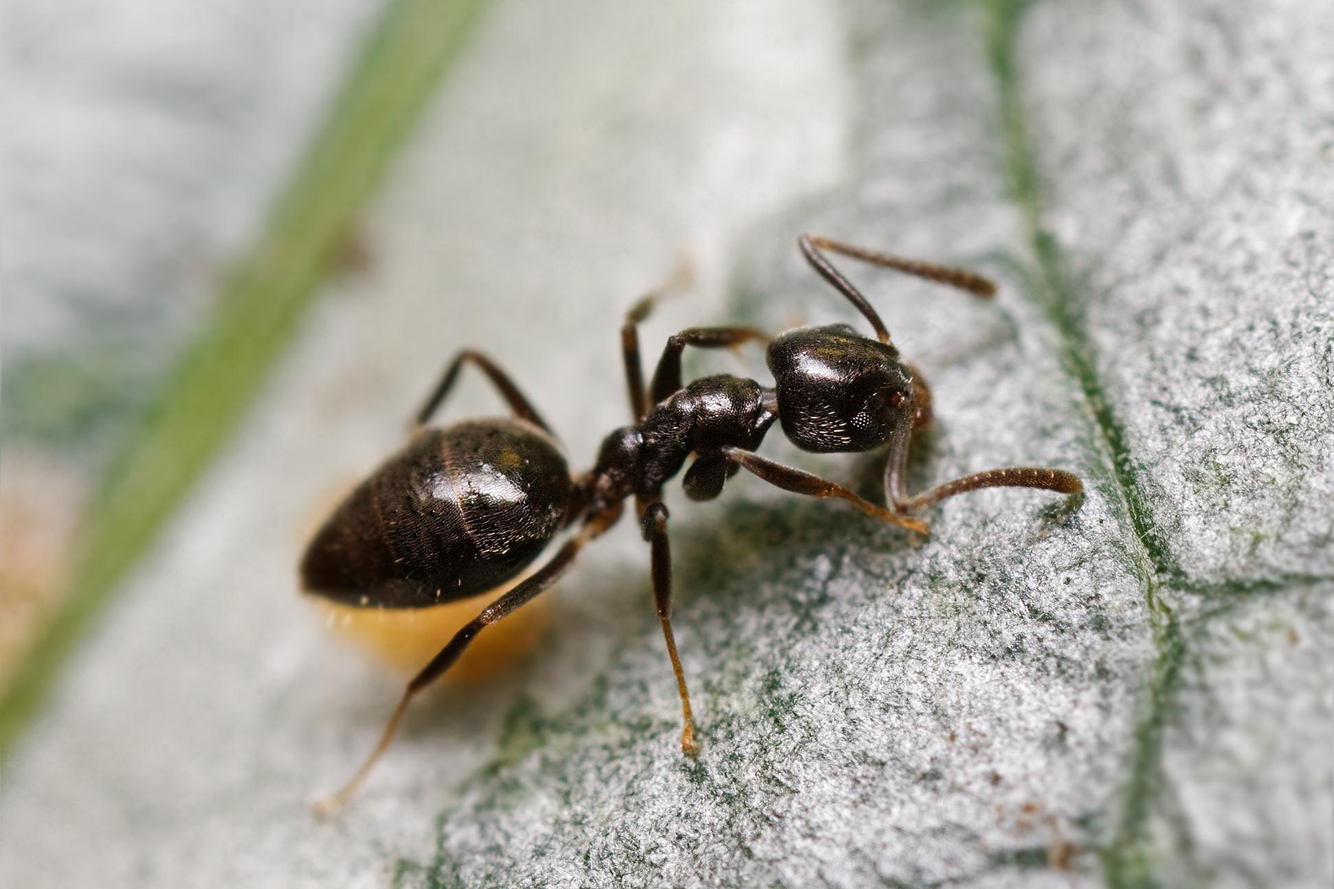 Ants In Kitchen Walls