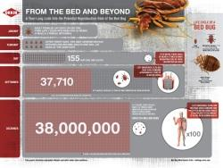 Bed Bug Infographic