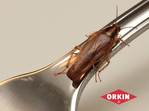 cockroach crawling on a fork
