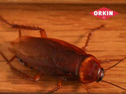 cockroach crawling on wood