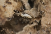Termite Control