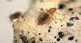bed bug state of the industry