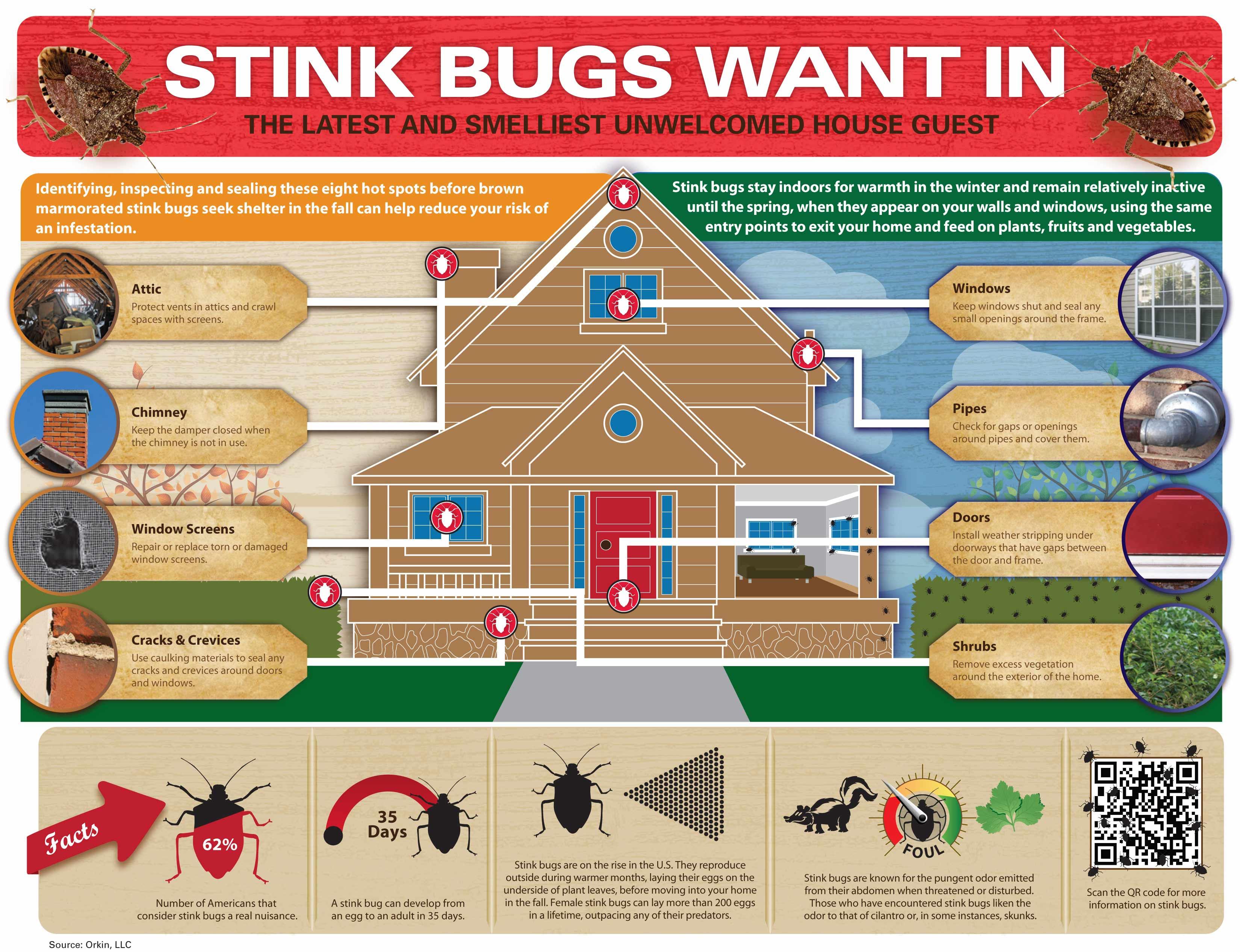 Control Stink Bugs