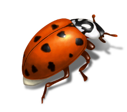 asian beetle illustration