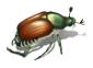 japanese beetle 1500x1094