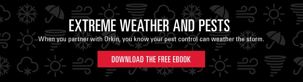 Download the free e-book