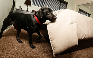 bed bug dog canine inspections