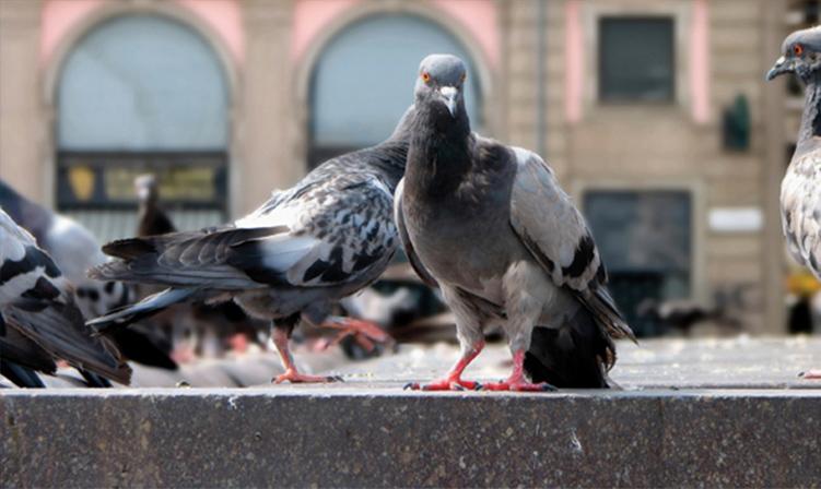pest bird management