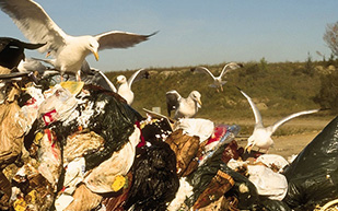 pest bird prevention
