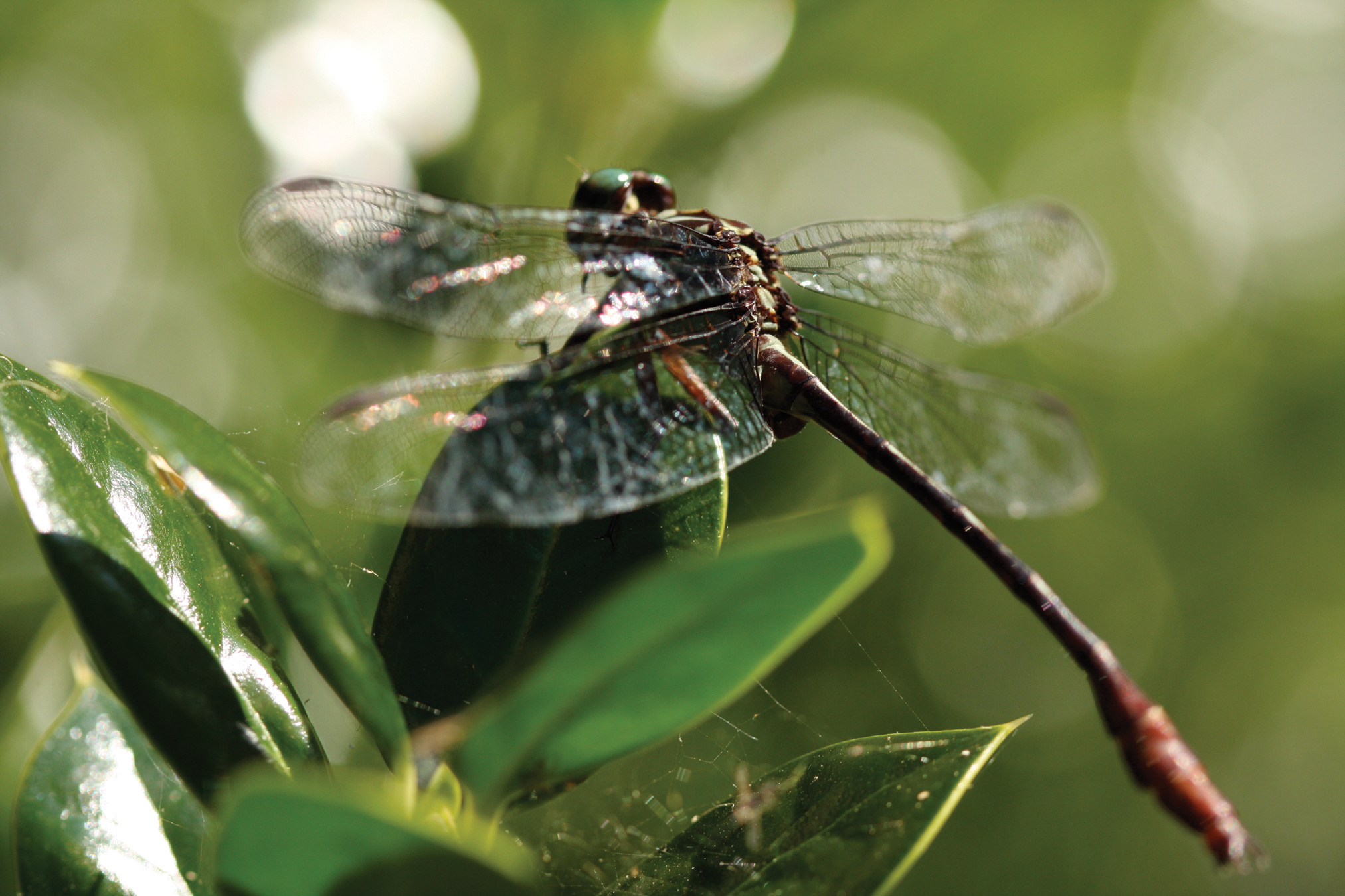 close up of dragonfly on plant
