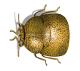 kudzu bug 1172x1042