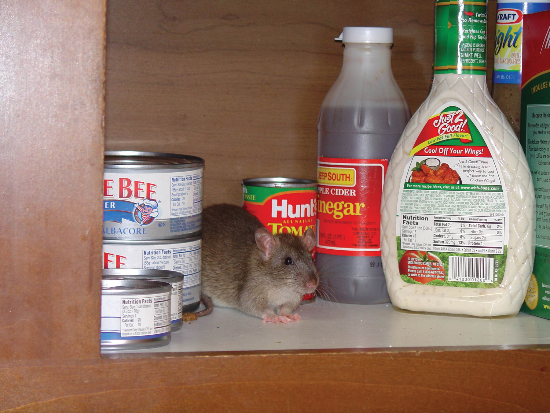 Rodent Pictures : Rat & Mouse Photos & Images