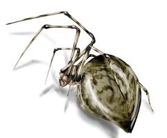 foto de Arañas domestica/ comun