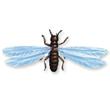 Termite swarmer (alate)