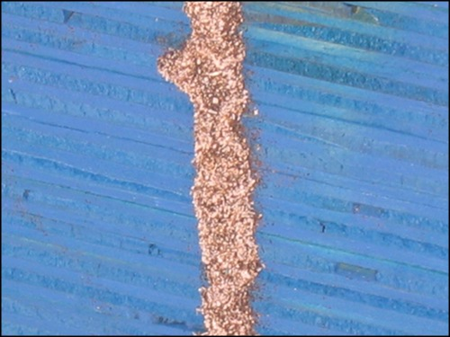 termite tube on wood closeup photo