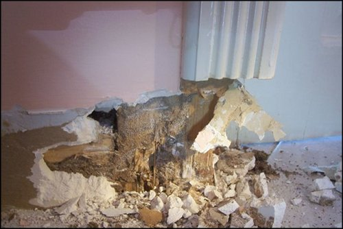 termites destroyed the bottom of this inside wall