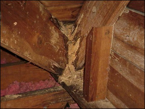 termite wall damage