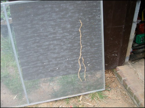 termite tube in a window screen left in storage