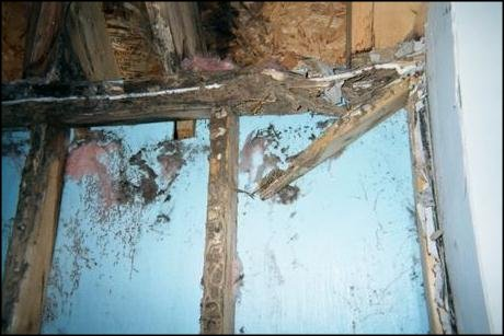 severe termite damage to a wall and ceiling