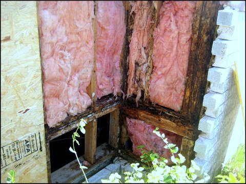 image of wall and insulation damage by termites